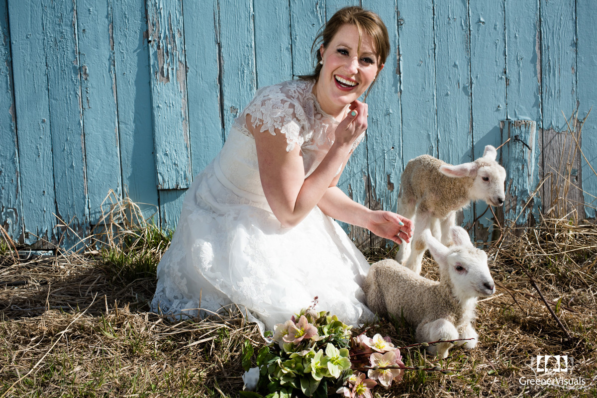 Rocky Creek Farm bride Lambs blue barn